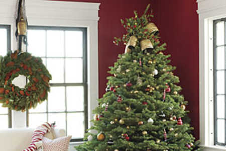 Decorated Christmas Trees