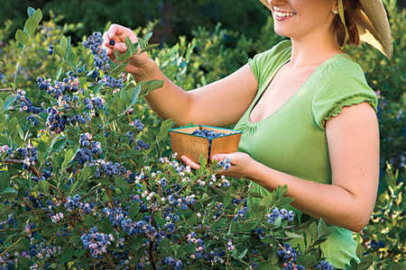 The Complete Guide to Essential Southern Plants