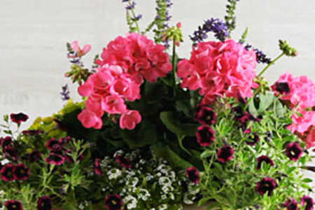 Potted Flowers for Your Porch