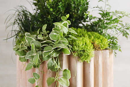 Plant a Boxwood Container