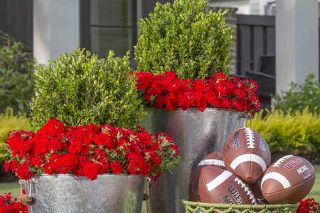 grumpy gardner game day garden contest