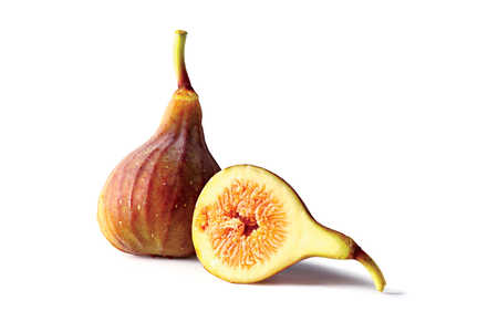 Fig Fruit Varieties: 'O'Rourke' Fig