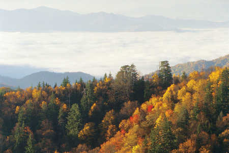 aerial view of cabins in the smokies