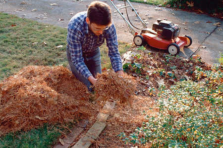 Get Your Mulch for Free