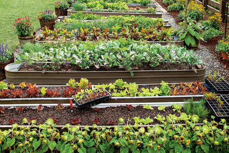 Canyon Kitchen Garden Beds