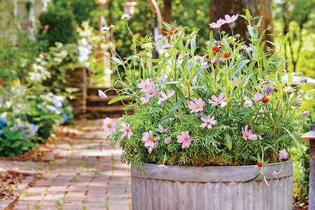 Wildflower Container Garden