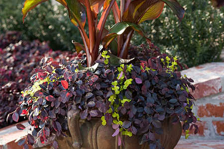 plant collection slideshow image 7