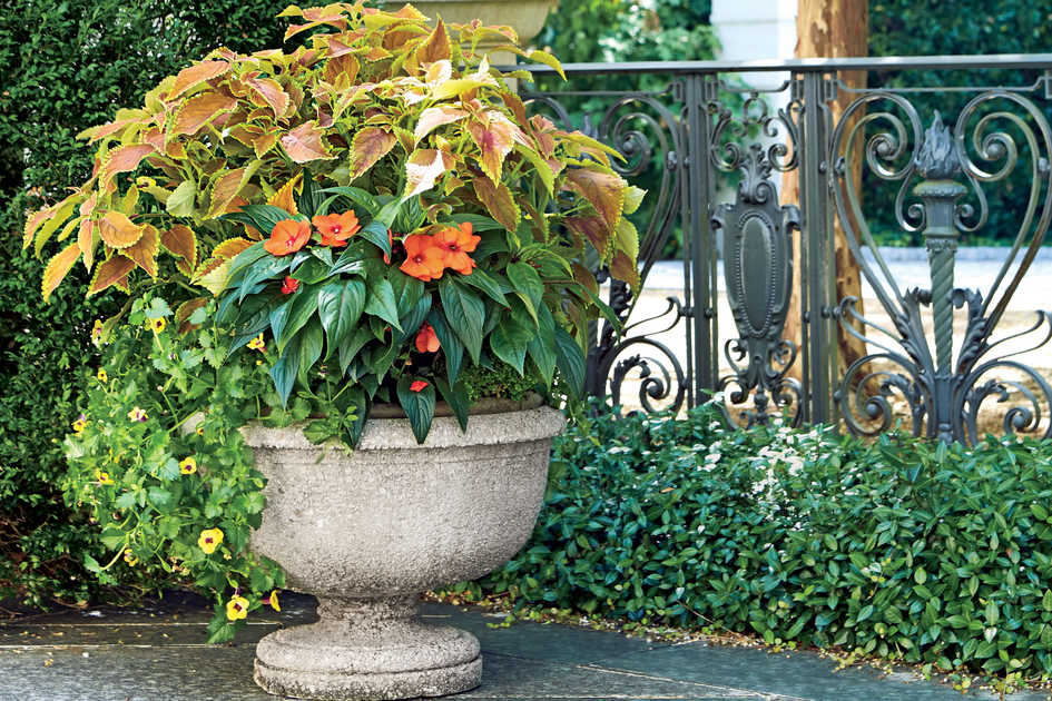 Florida Front Yard Landscaping Ideas Curb Appeal